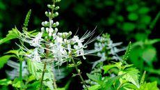 Tanaman Herbal yang Baik untuk Kesehatan Jantung