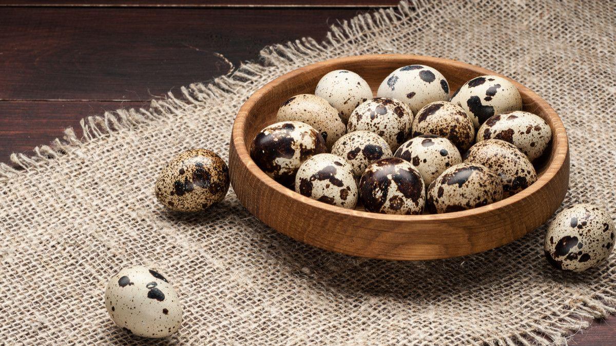 telur puyuh