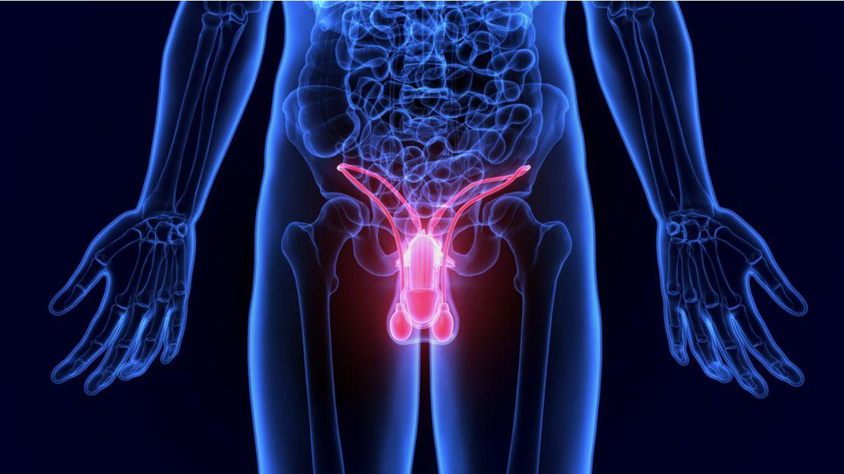 4 Tips Menjaga Kesehatan Organ Reproduksi Pria