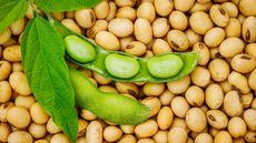 Kedelai, Biji-bijian dengan Beragam Manfaat (Nnattalli/Shutterstock)