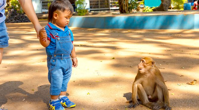 Penyebab Cacar Monyet