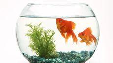 Manfaat Memelihara Ikan Bagi Kesehatan Mental Anda
