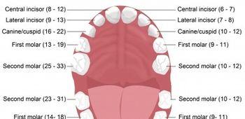 Ini 7 Cara Tepat Untuk Memilih Sikat Gigi Anak