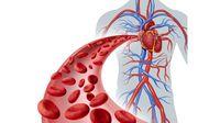 Mengenal Sistem Peredaran Darah Manusia Beserta Fungsinya