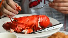 Jangan Makan Lobster Berlebihan, Ini Risikonya