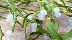 Inilah Manfaat Mistletoe untuk Kulit dan Rambut