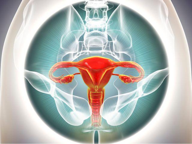 9 Fakta Tentang Ovarium Yang Perlu Diketahui Wanita