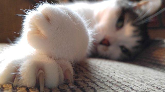 Anak Terkena Cakaran Kucing Hati Hati Bisa Timbulkan Infeksi