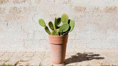 Manfaat Kaktus untuk Kulit yang Jarang Diketahui