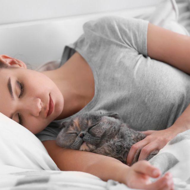 Meski Nyaman Amankah Tidur Bersama Kucing