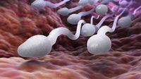 5 Makanan untuk Tingkatkan Kualitas Sperma Pria (Tatiana-Shepeleva/Shutterstock)
