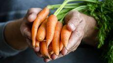 Begini Cara Kuman Menempel di Tubuh Anda (Abramova Elena/Shutterstock)